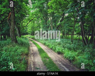 Forest road in Cedynia Landscape Park in West Pomeranian Voivodeship of Poland - Stock Photo