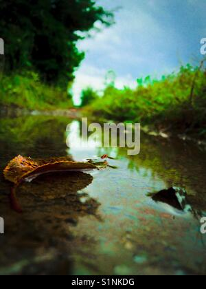 Blue-green photo of water puddle in lane after rain storm - Stock Photo