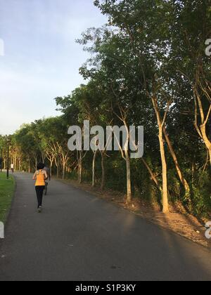 One of the nature park connector trail in the northeast Singapore. - Stock Photo