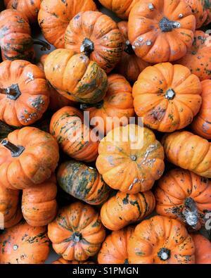 Baby pumpkins - Stock Photo