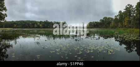 Cold autumn day out on a nature trail viewing the lake with lily pads and beautiful trees in the background with - Stock Photo