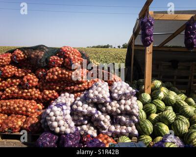 Selling vegetables - Stock Photo