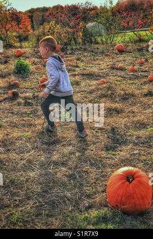 Little boy running in the pumpkin patch. - Stock Photo