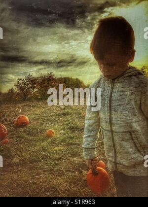 Little boy in a pumpkin patch. - Stock Photo