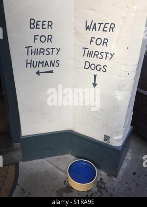 Water for thirsty dogs, beer for thirsty humans - Stock Photo
