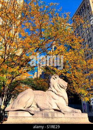 Statue of lion in the fall ,New York City public library, Fifth Avenue, NYC, USA - Stock Photo