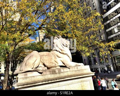 Fortitude the library lion statue in front of the main New York City Public library, 5th Avenue, NYC, USA - Stock Photo