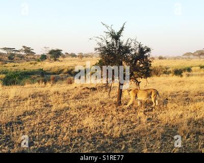 Serengeti National Park, Tanzania - Stock Photo