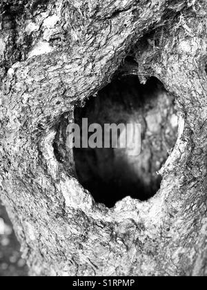 Hole in old tree - Stock Photo