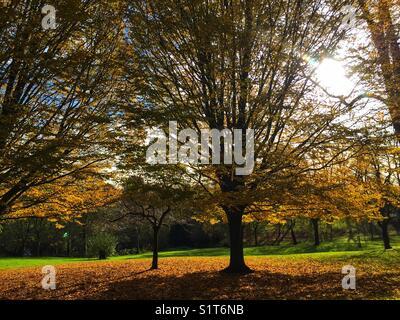 Waterlow Park in Highgate in London, England. Photo taken November 19 2017 - Stock Photo