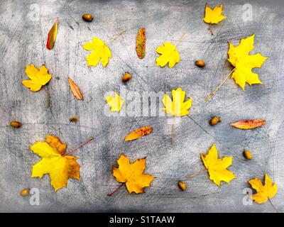 Yellow Dry Autumnal Leaves and Acorns on Scratchy Background - Stock Photo