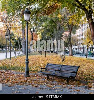 autumn mornings in the park - Stock Photo
