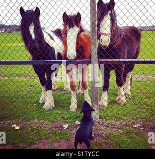 Horse whisperer - Stock Photo