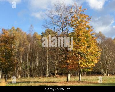 Autumn colours on trees at Paultons Golf course near Romsey, Hampshire, UK - Stock Photo