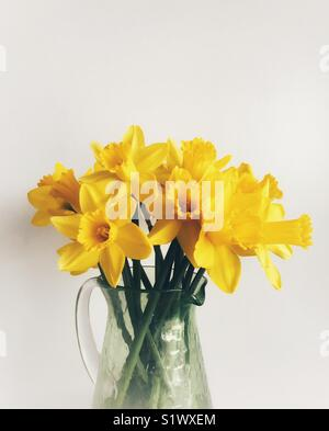 Daffodils in a green glass vase against a plain background - Stock Photo