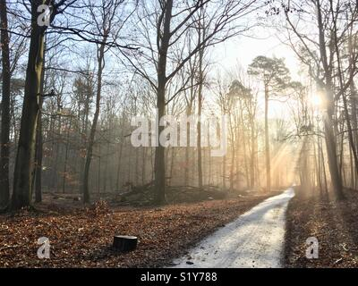 Winter landscape in the forest.  Sun shines through trees without leaves from right of picture following a snow - Stock Photo
