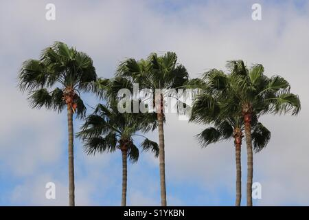 Palms in the wind - Stock Photo