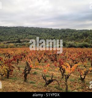 View of vineyards in the Corbières wine region of southern France - Stock Photo