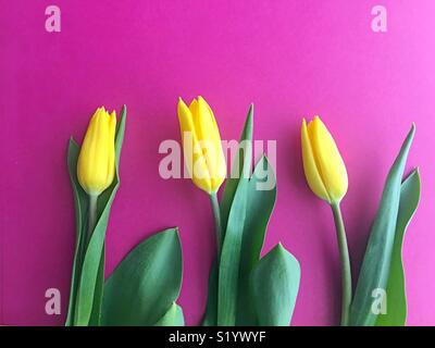 Three tulips. - Stock Photo