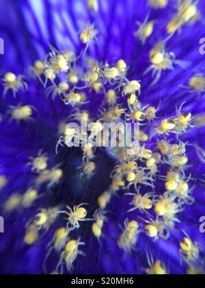 Newborn spiders. - Stock Photo