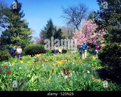 Shakespeare Garden in Spring in New York s Central Park Spring Stock ...