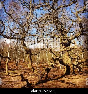 Photo taken in Sherwood Forest on a beautiful spring day. Very close the the famous major oak! - Stock Photo