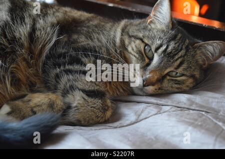 Tabby cat lying on bed - Stock Photo