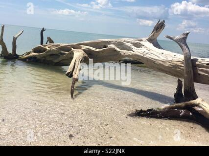 White sand and driftwood on a beach in Florida - Stock Photo
