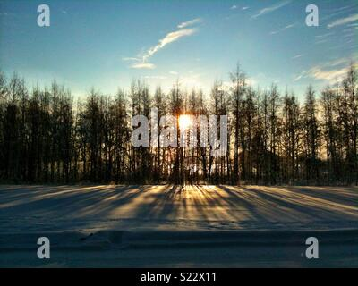 Sun rising behind trees casting long shadows on the snow - Stock Photo