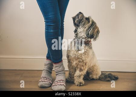 Low angle view of a cute little dog sitting next to her fashionable owners legs and looking up to her longingly - Stock Photo