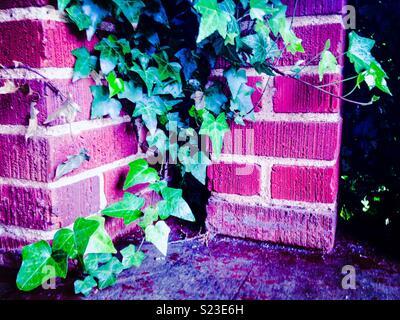 Magenta emphasized photo of ivy growing on brick columns - Stock Photo