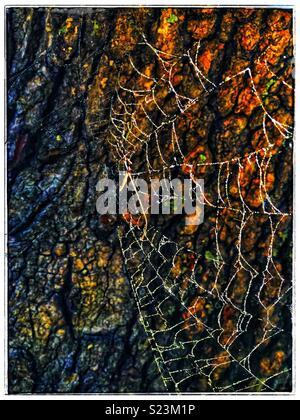 Spiders web - Stock Photo