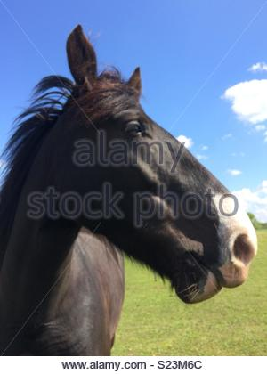Close-up of a Horse in the field - Stock Photo