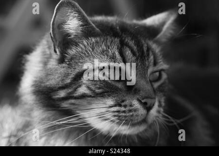 Black and white cat photography - Stock Photo