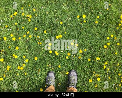 Person wearing sneakers standing on field of daffodils and grass looking down - Stock Photo