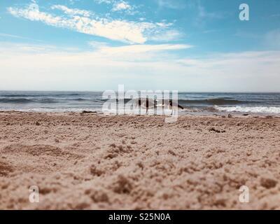 East coast beach - Stock Photo