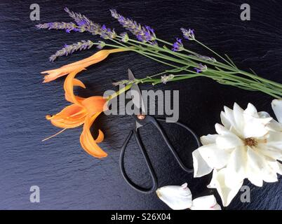 Elevated view on floristic background, blooming lavender, white rose, day lily and vintage scissors - Stock Photo