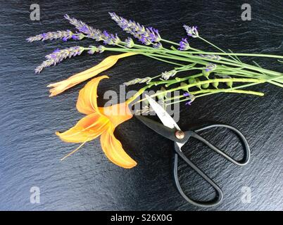 Elevated view on floristic background, blooming lavender and day lily, vintage scissors - Stock Photo