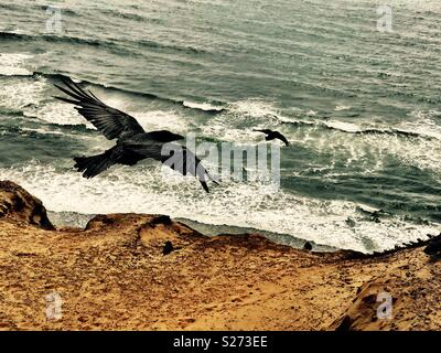 Ravens swoop off updrafts tumbling toward the tumultuous waves below. - Stock Photo