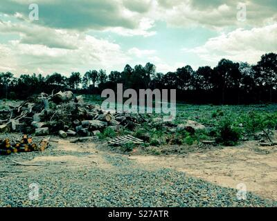 Summer photo of refuse tree wood pile in front of field harvested of lumber last winter - Stock Photo