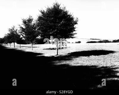 Small round trees casting summer shadows on grass in mono - Stock Photo