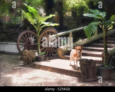 A temple dog stands at the bottom of the stair. Dogs are everywhere in Thailand - Stock Photo