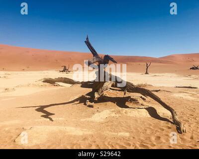 900 year old dead camelthorn trees in Deadvlei Sossusvlei Namibia. - Stock Photo
