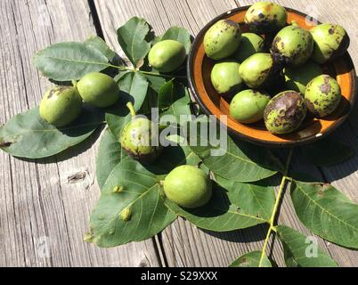 Agricultural bio products. Freshly harvested walnuts together with leaves in ceramic bowl on wooden boards - Stock Photo