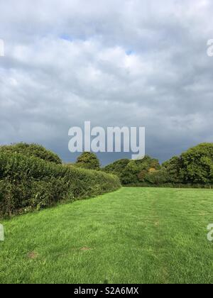 Field grass and trees in various shades of green against a dark grey stormy sky - Stock Photo