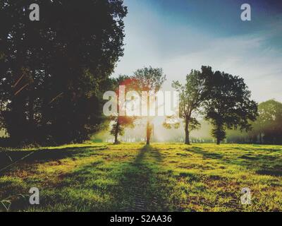 Sun rising behind a row of trees, casting shadows on the meadows - Stock Photo