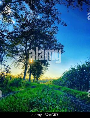 Sun rising behind a line of trees next to a dirt road between the farmlands - Stock Photo