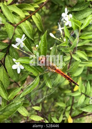 Dragonfly - deceased and back to nature - sleeping beauty in nature. - Stock Photo