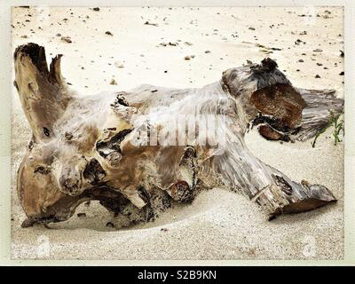 Driftwood on White Sand Beach in Western Isles, Scotland in September - Stock Photo