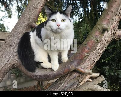 Black and white cat in tree - Stock Photo